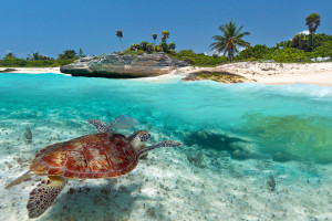 spanish and diving in mexico