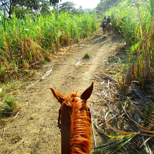 cuban experience horse riding